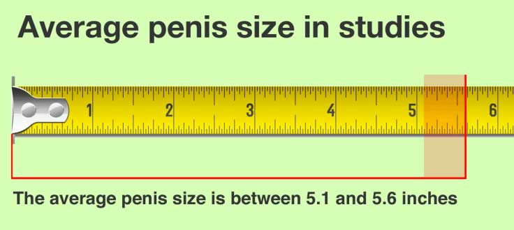 average-penis-size